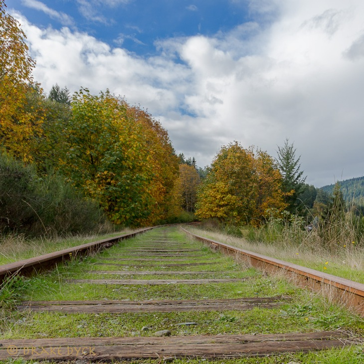 Tracks-and-Trees