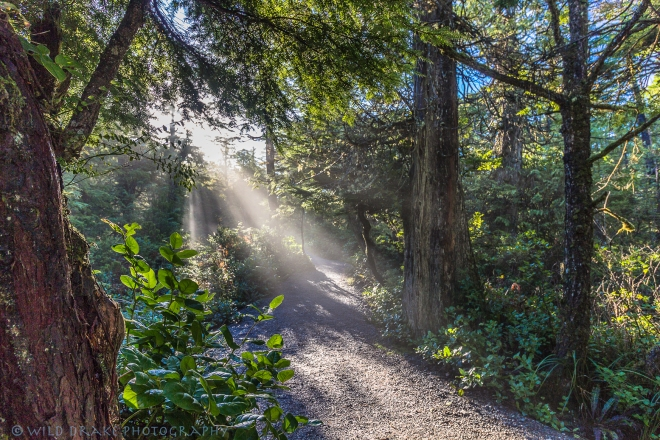 Beams of sunlight illuminate the pathway on the Wild Pacific Trail
