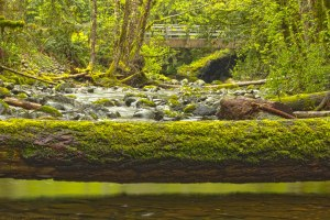 fallen log over Charters Creek Sooke BC