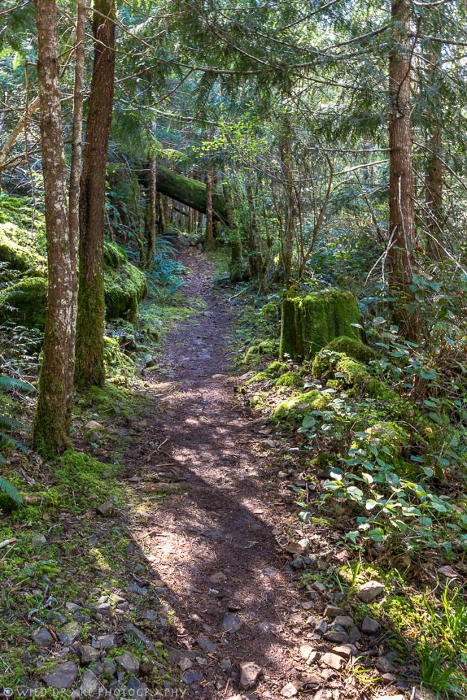 This trail runs alongside Mary Vine Creek