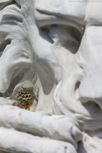 honeycomb structure of a wasp nest on a stone lion