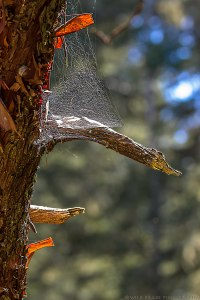 a complex spiderweb in an old tree