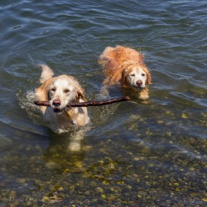 A Favourite Waterside Activity