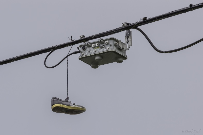 a single shoe dangles by a lace from a power line
