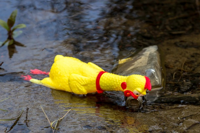 rubber chicken face down on a bottle in a stream