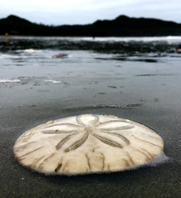 a sand dollar on the beach with the mountains in the background