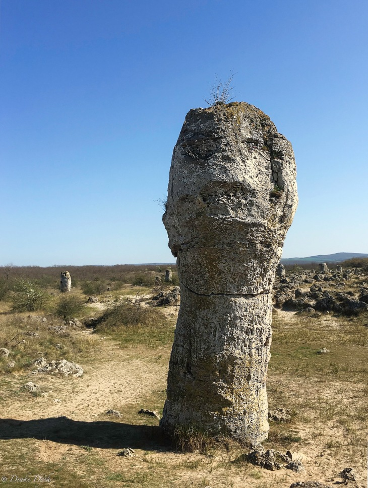 stone forest face