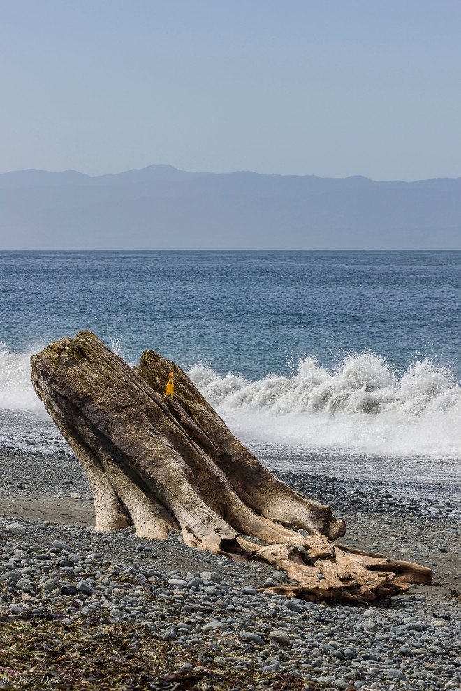stump on the beach with waves and mountains