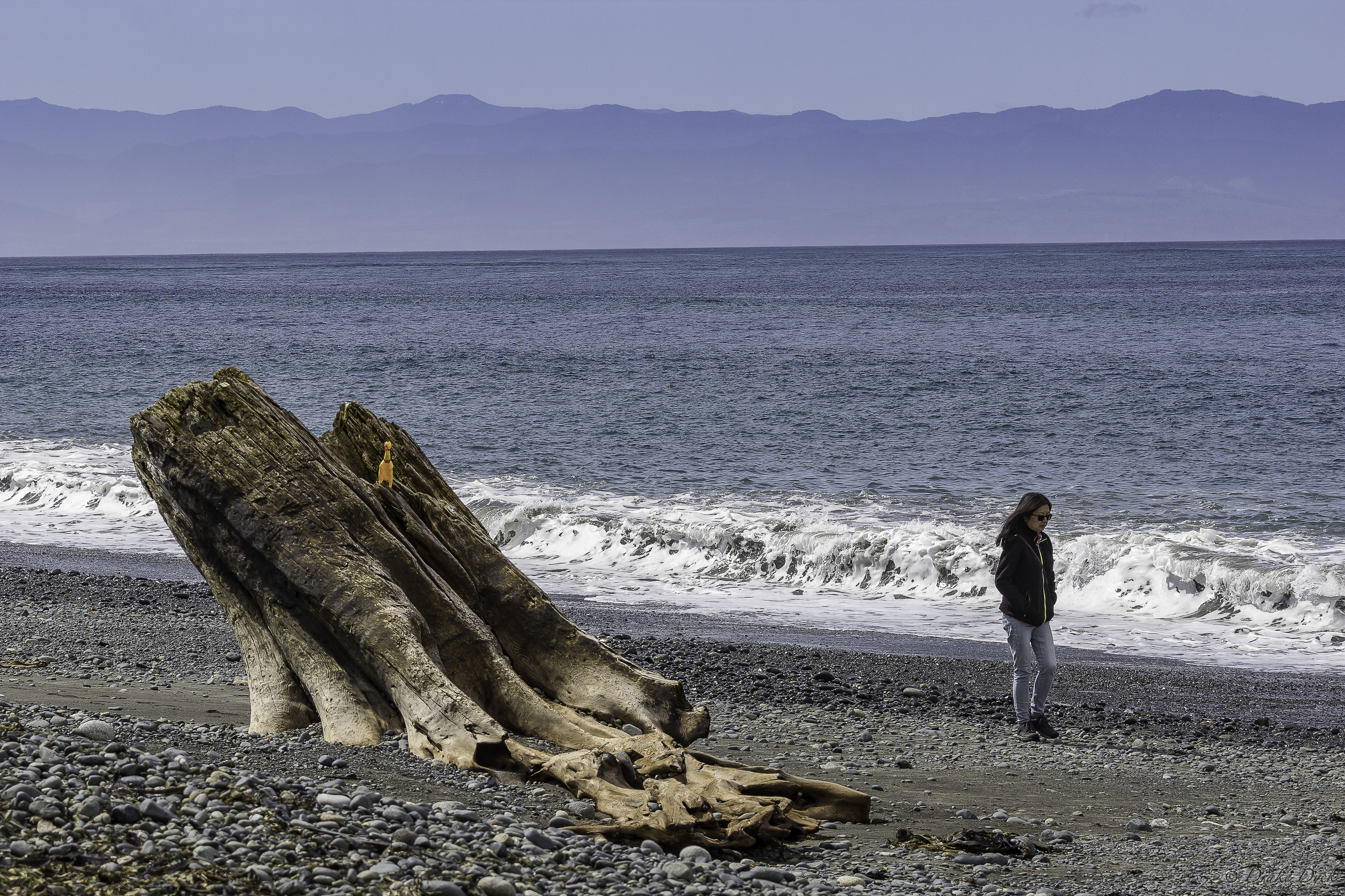 a rocky beach watched over by a chicken on a log and walking woman