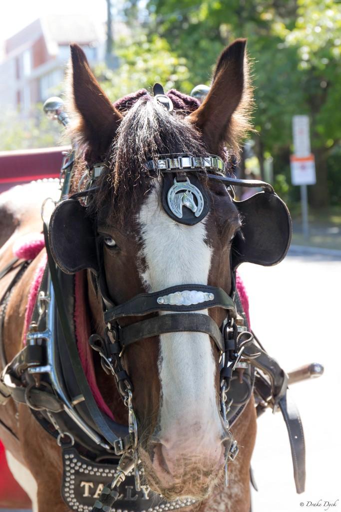 headshot of a horse