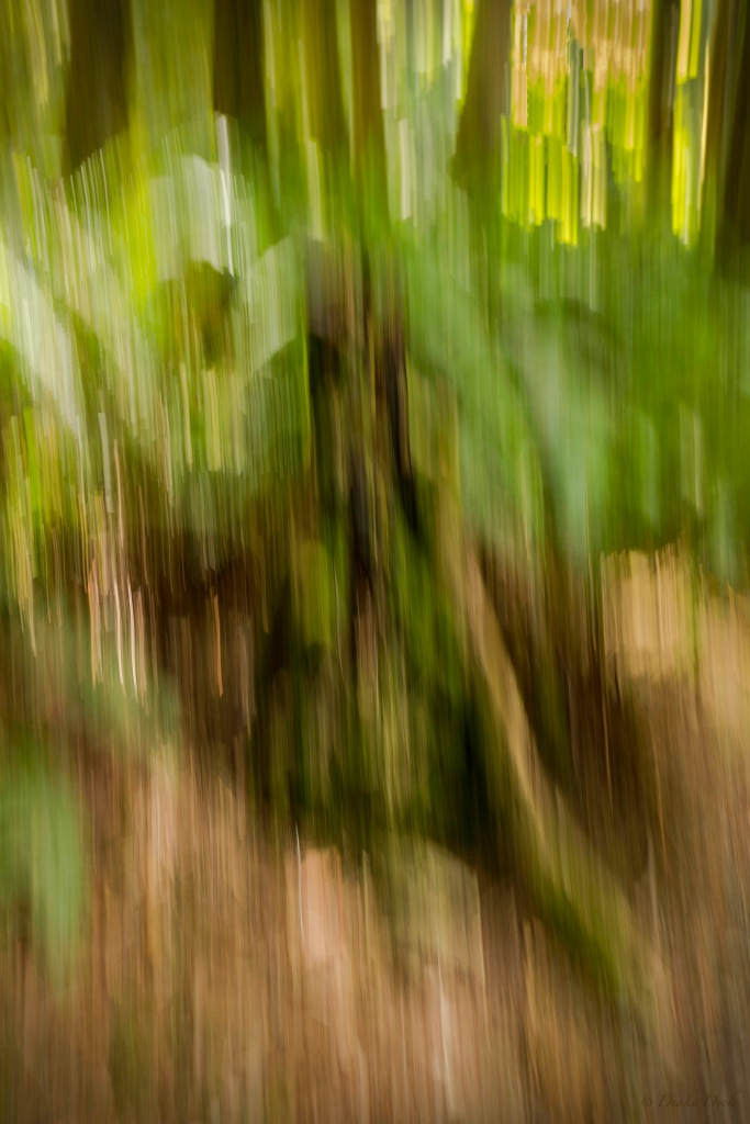 a blurred  image of a decaying tree stump