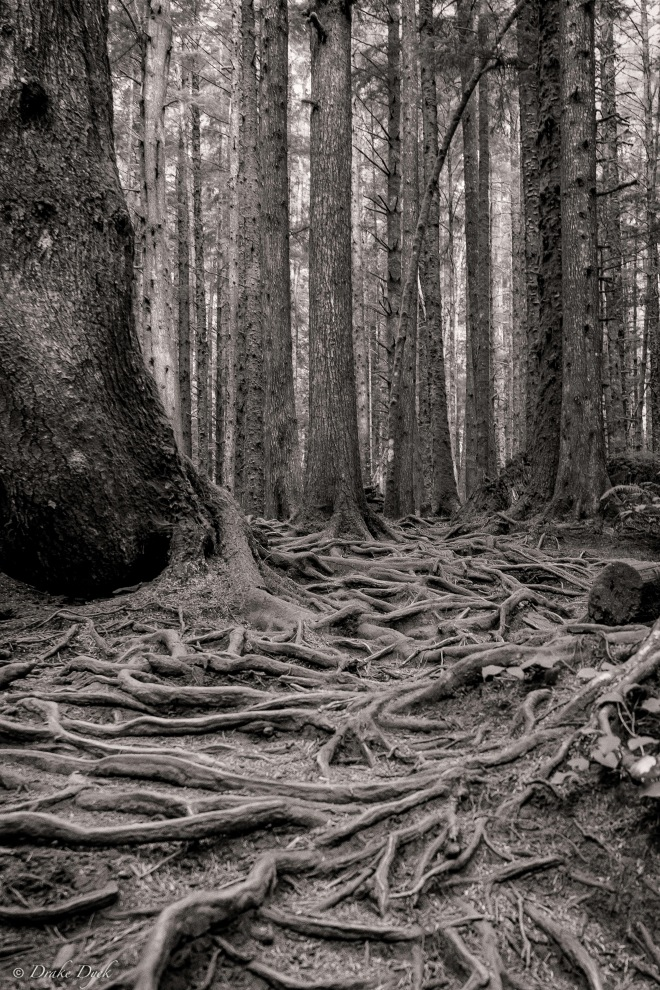 roots bw