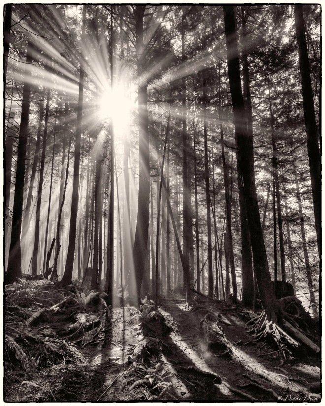 black and white photo of rays of light illuminating fog in the rainforest