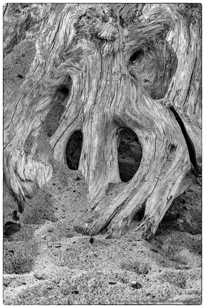 driftwood in the sand, looking like a skull
