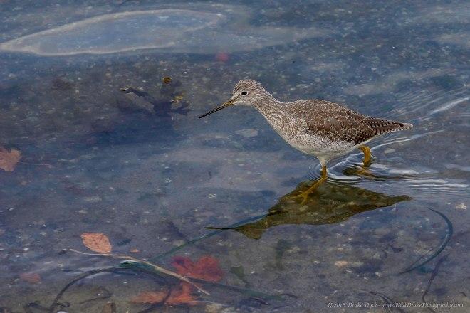 bird wades through the water