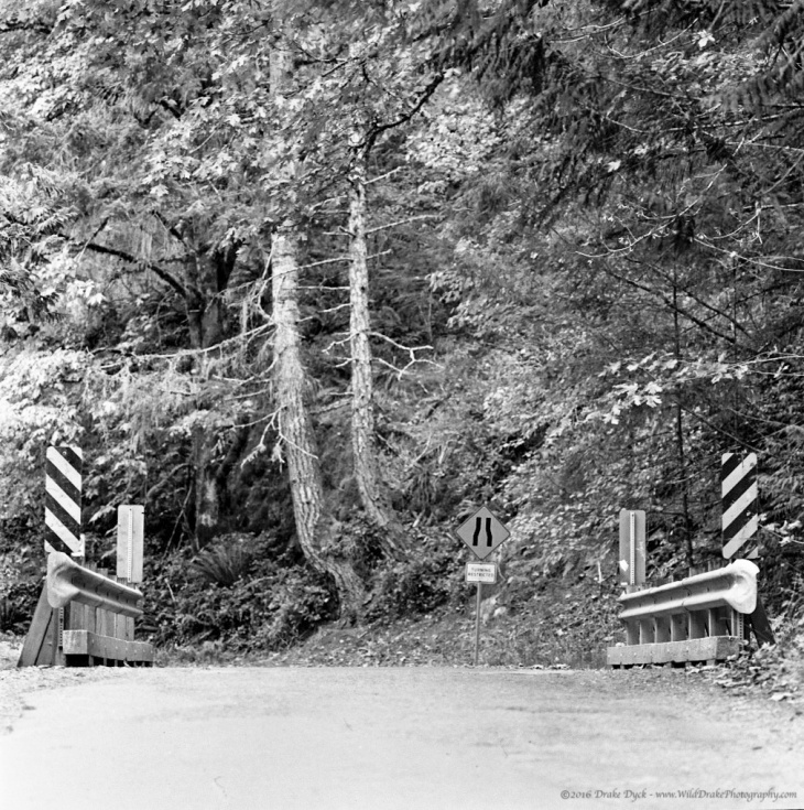 a small bridge on a road in the forest