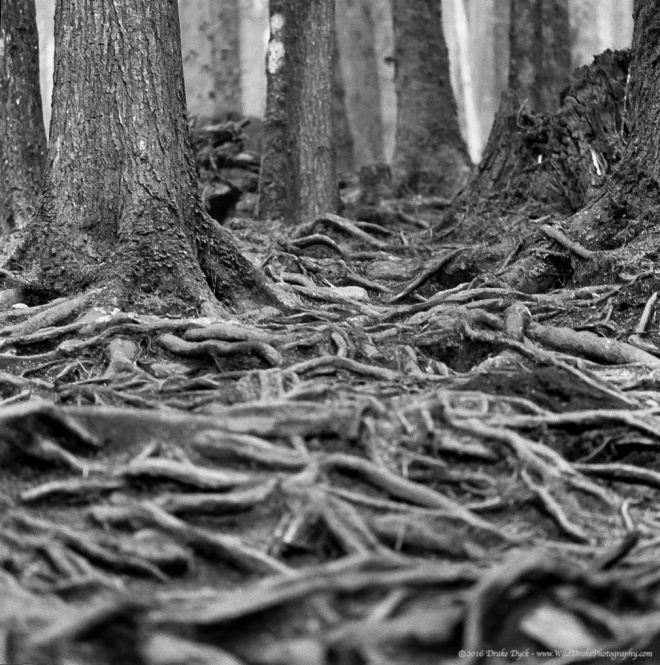 Creeping Roots