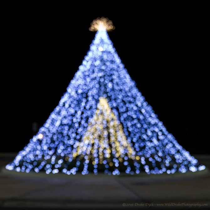 christmas tree shaped light display
