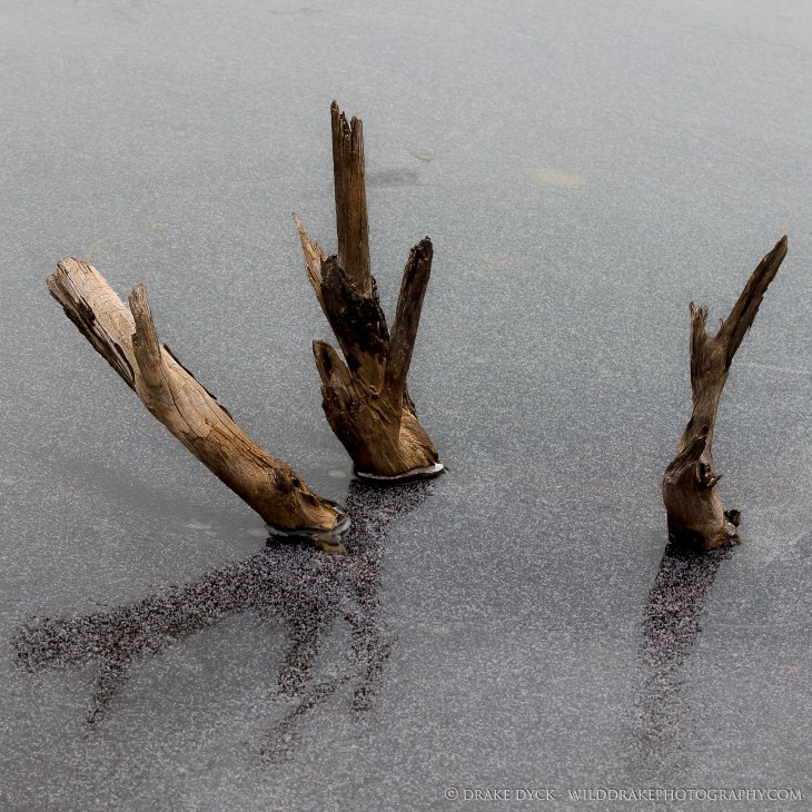 Three branches break the surface