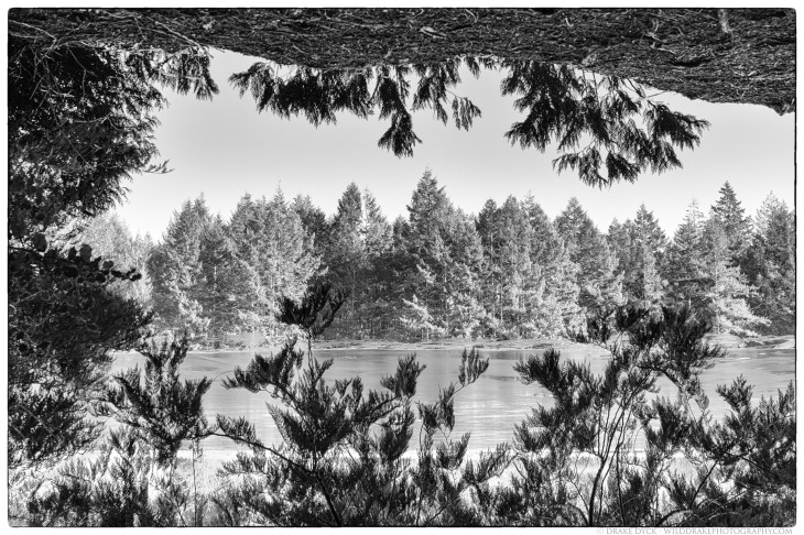 a mirror image photograph of Blinkhorn lake, partially covered in ice