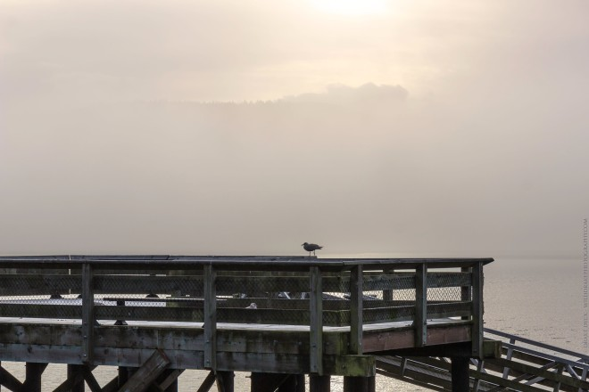 a bird rests on the boardwalk on a foggy day