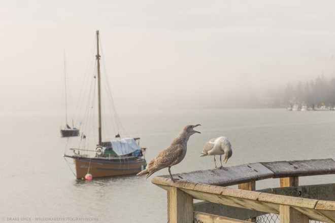 two seagulls on a railing in front of a sailboat