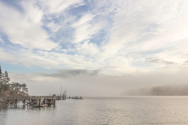 foggy-harbour