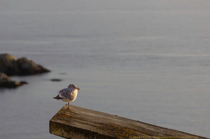 Seagull with a view