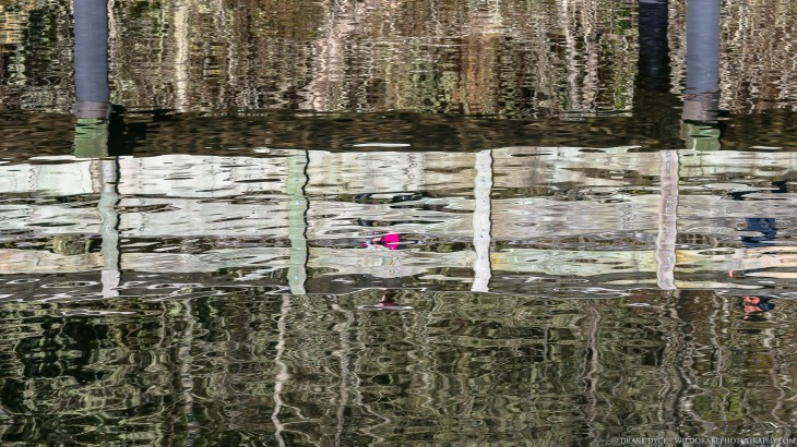 pink-on-ripples