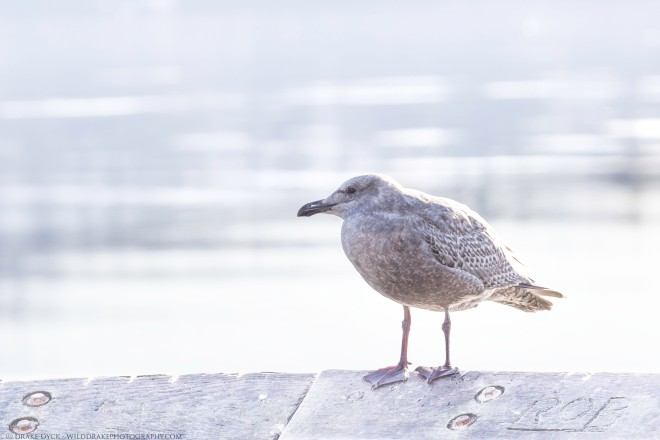 seagull sits on a railing