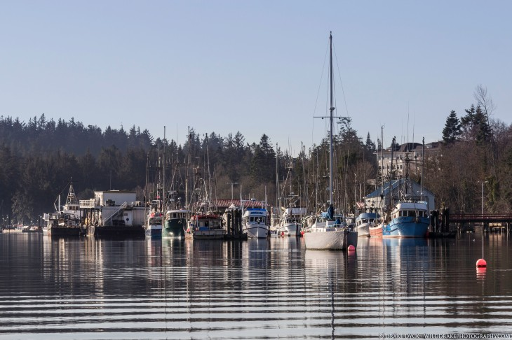 various boats in the Sooke Harbour basin