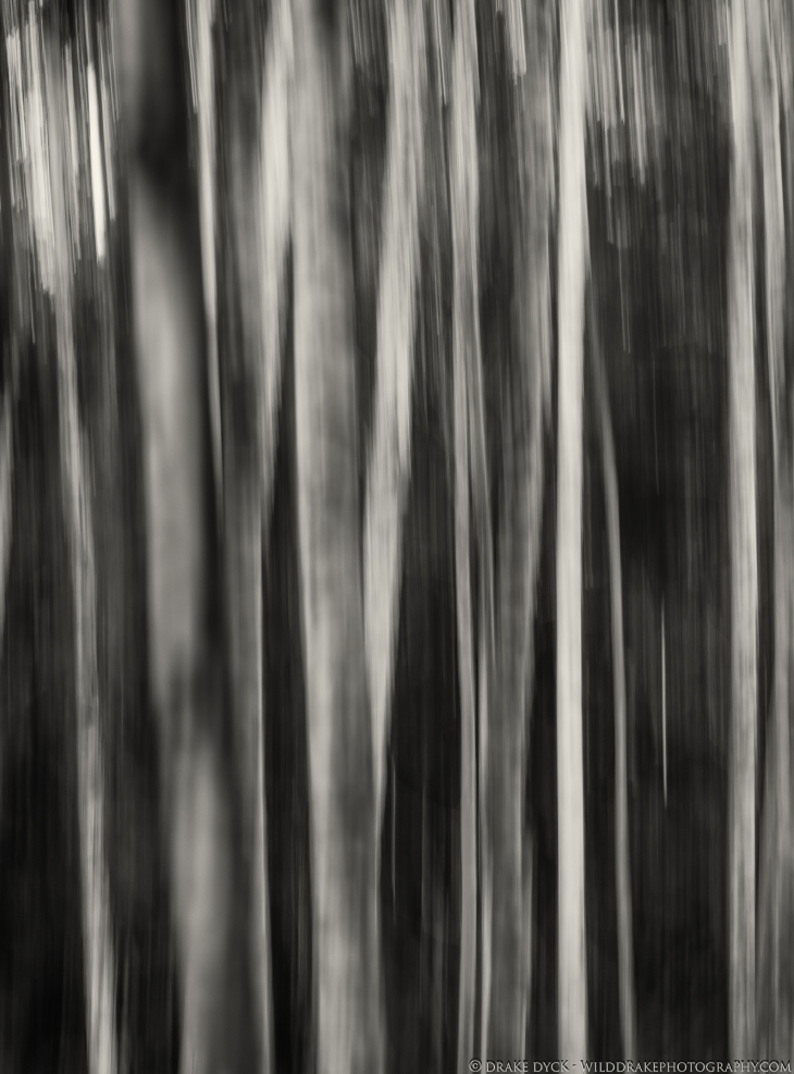 intentional camera movement image of trees in black and white