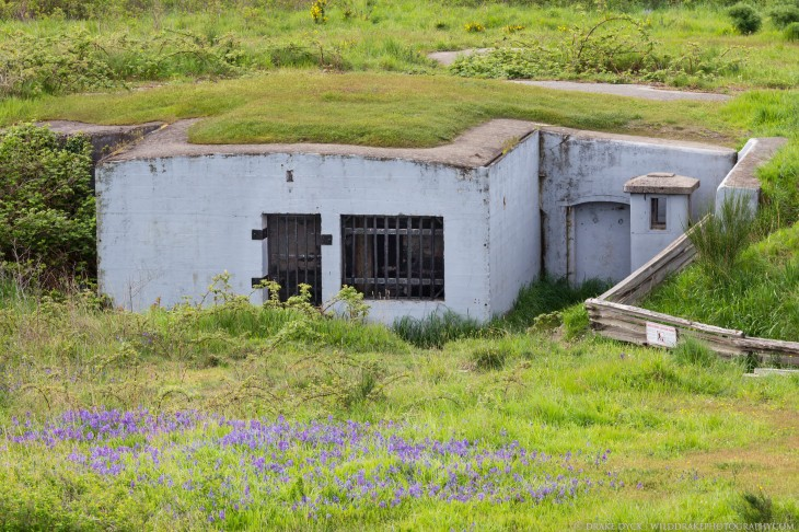old Fort Macaulay bunker in a field with purple flowers