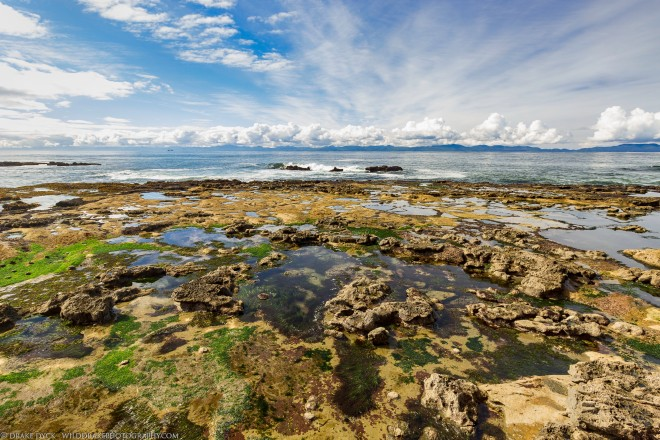 tide pools filled with flora and fauna on the southwest edge of Vancouver Island with some fluffy white clouds