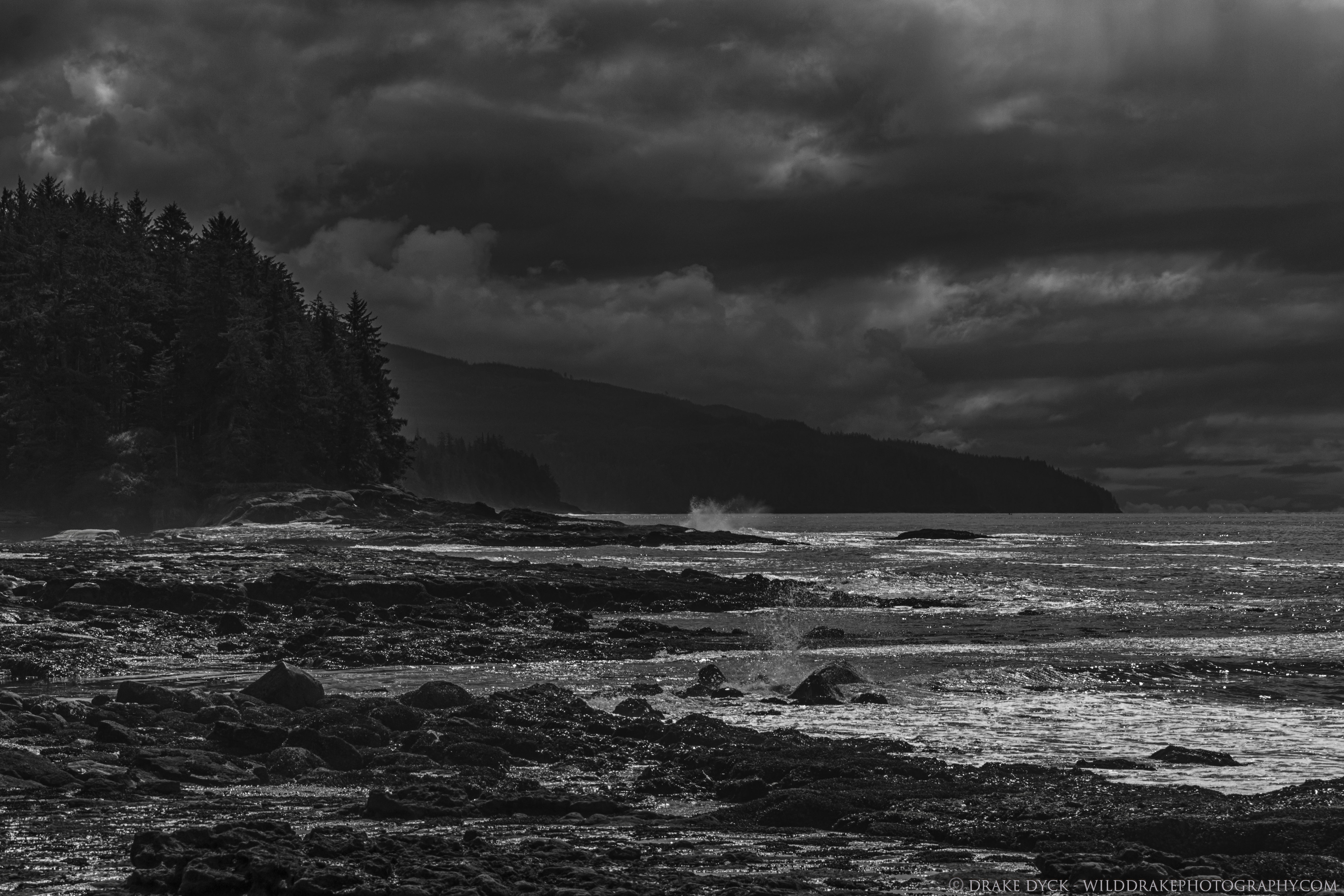 black and white image of Botanical Beach showing rocky shore and some trees under dark clouds