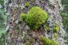 Moss Lichen Tree 3