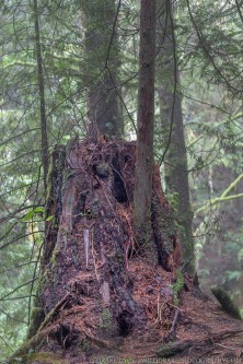 Stump with Tree in it