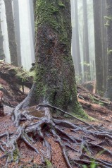 Tree with Roots Showing