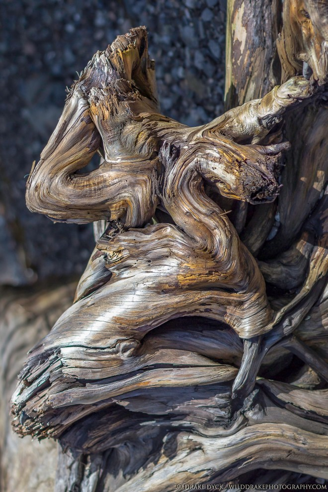 details revealed in driftwood