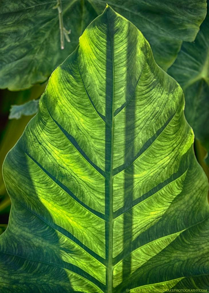 beautiful backlight green leaf