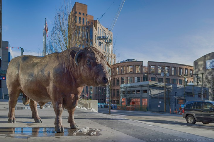 a brass bull stands on the sidewalk near the Vancouver Public Library