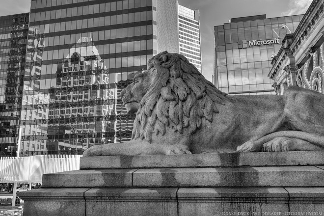 BW Lion Reflections