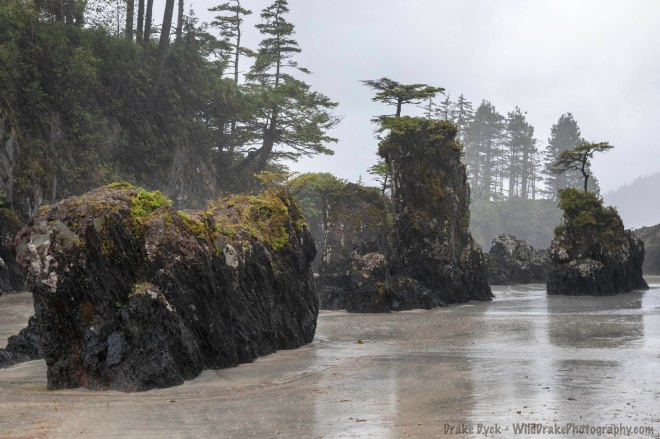 pouring rain in Cape Scott Provincial Park
