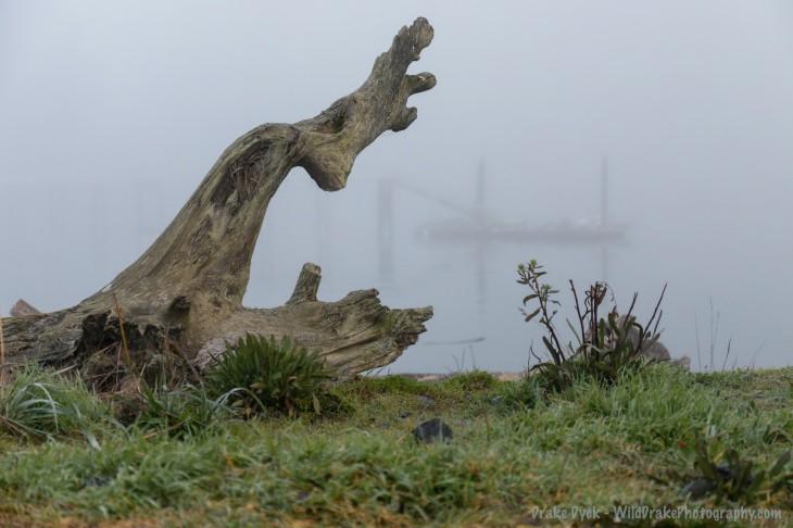 driftwood along a grassy beach on a foggy day