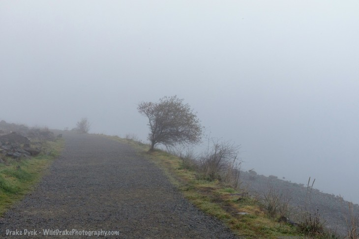 foggy shores and walkway with an isolated tree